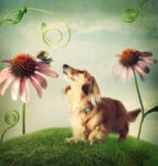 cartoon of small dog among echinacea/purple coneflowers