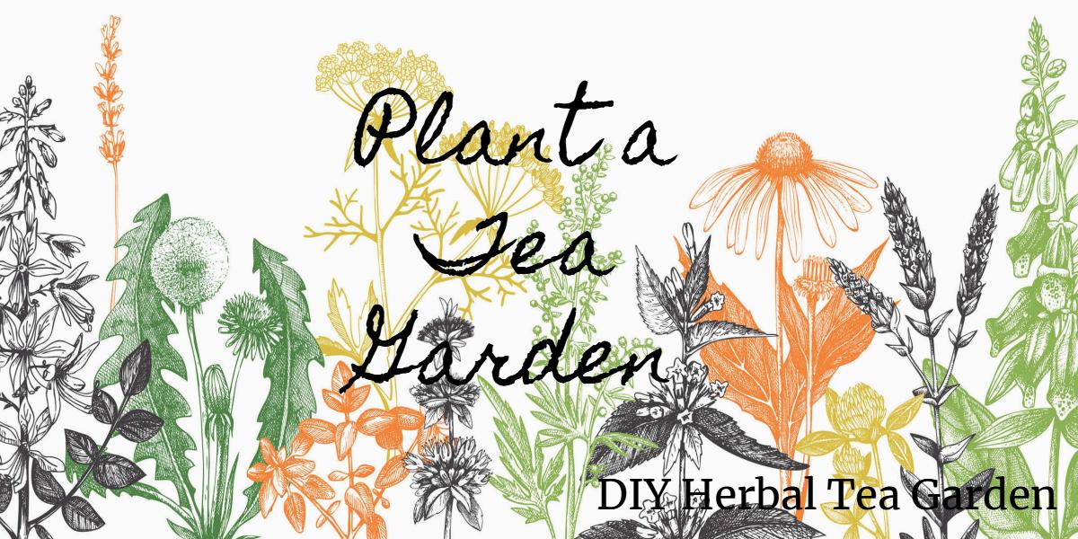 Herbal Tea Garden Image