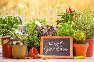 potted plants in herb garden